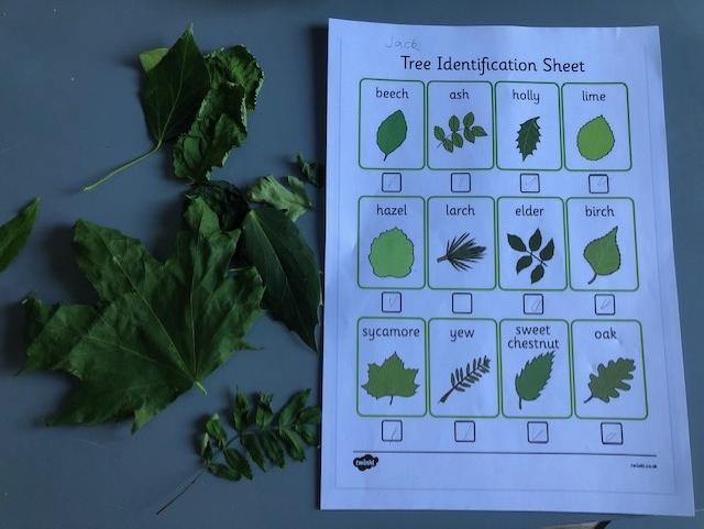 Jack's tree identification