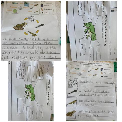 All about frogs by Evalyn