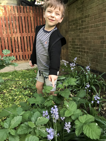 Lewis finding bluebells