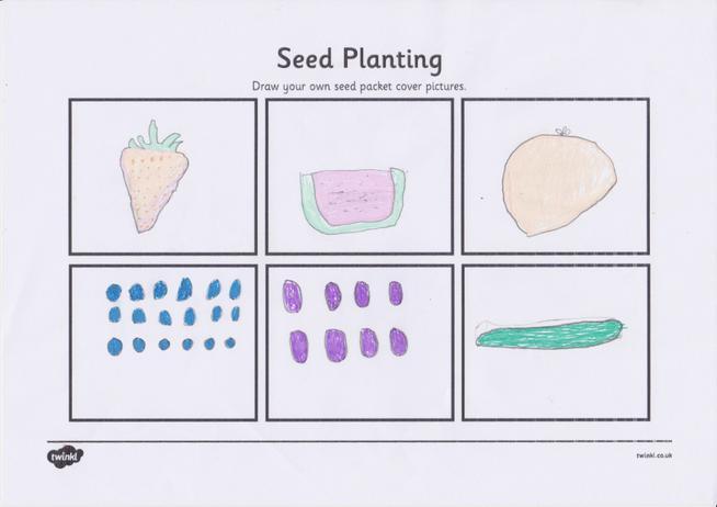 Lewis's seed packet designs