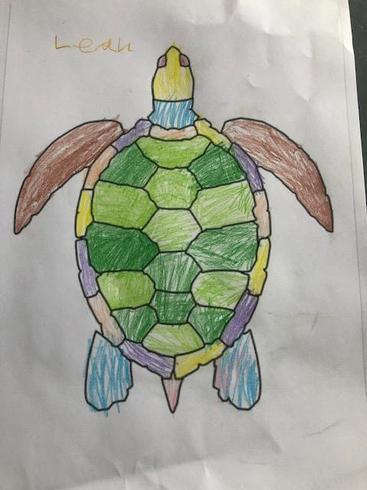 Leah's turtle