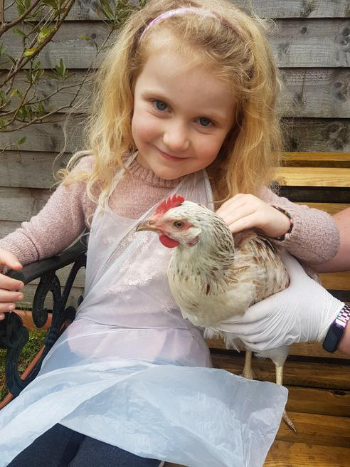 Looking after Daisy chicken