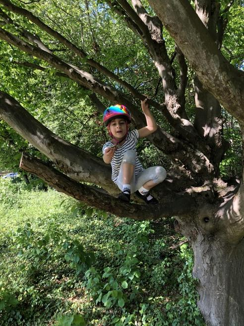 More climbing trees