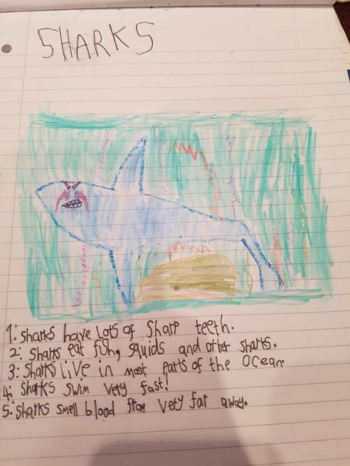 Richard's fact file on sharks