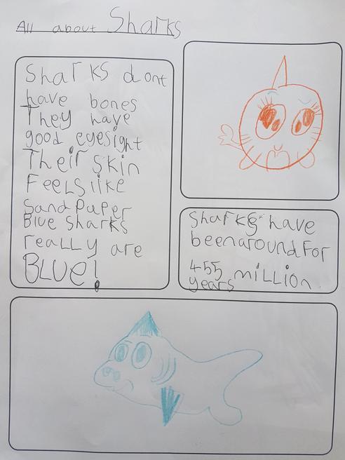 Gabriella's shark fact file