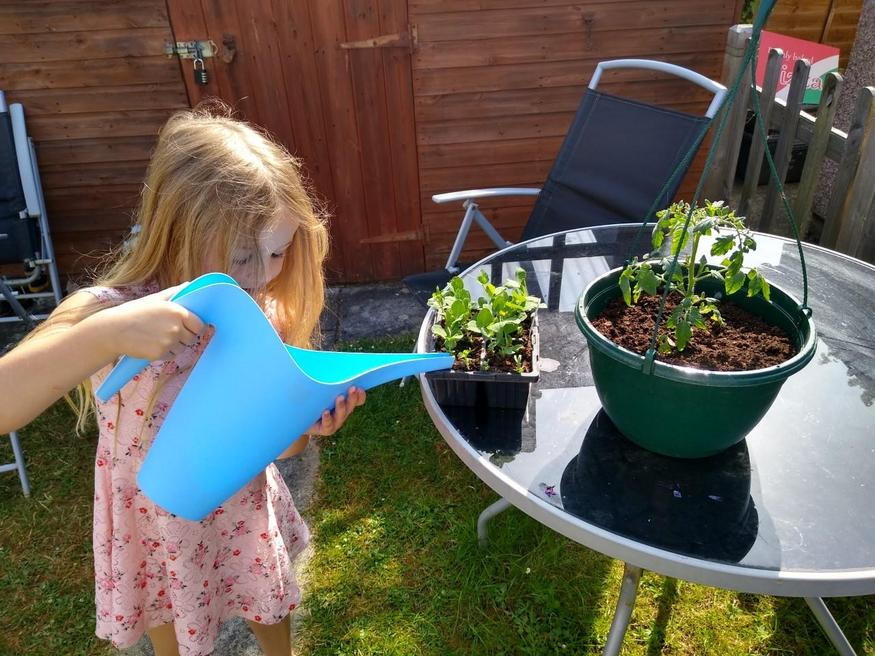 Sofia planting and watering