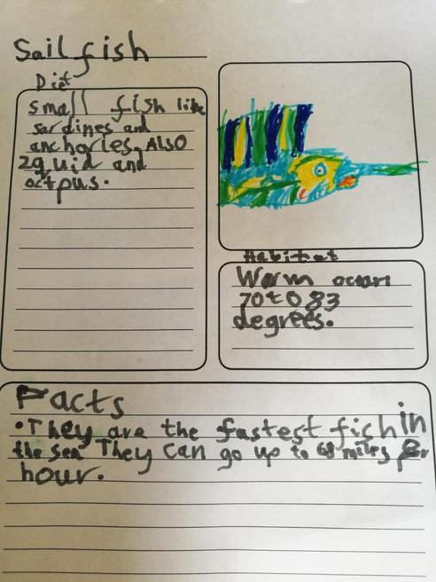 Ethan's factfile on Sailfish