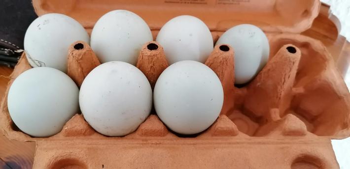 The eggs.