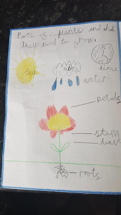 Amazing Plant leaflet