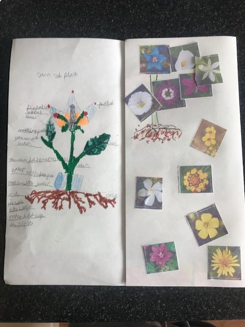Emilia has worked very hard on her plant leaflet!