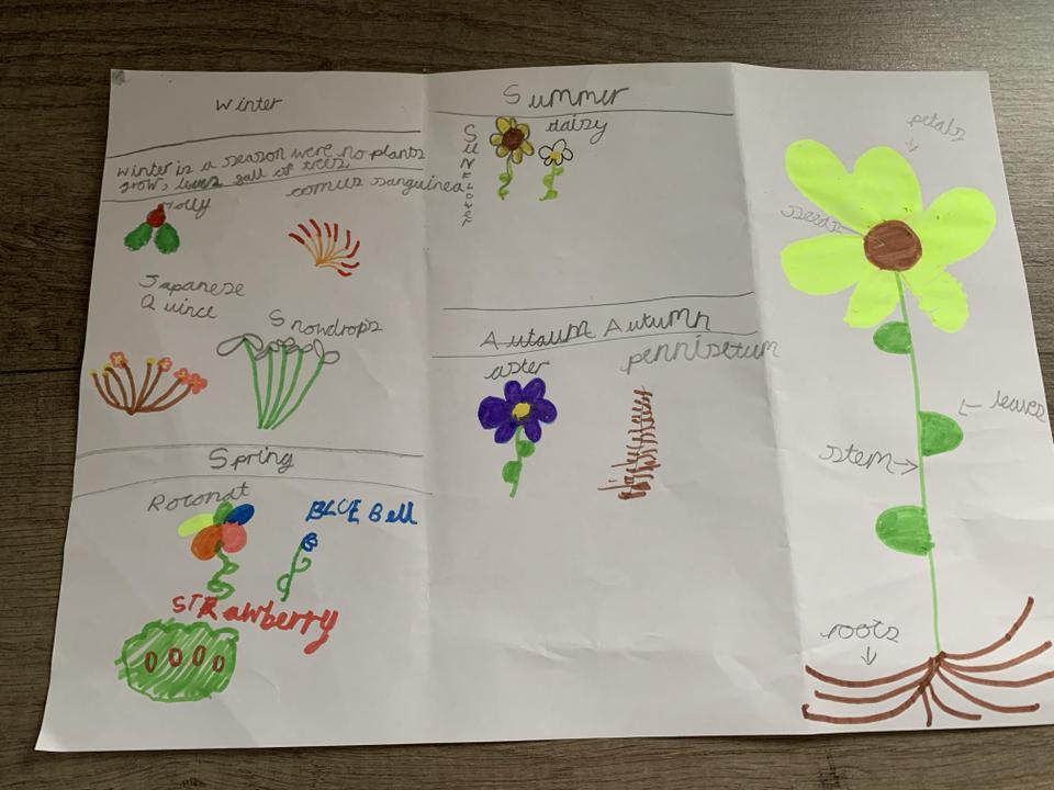 A fantastic plant leaflet by Sophie!