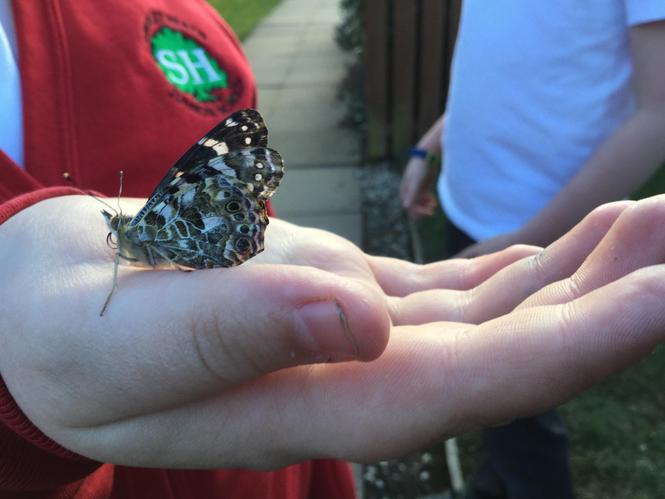 Releasing our Butterflies