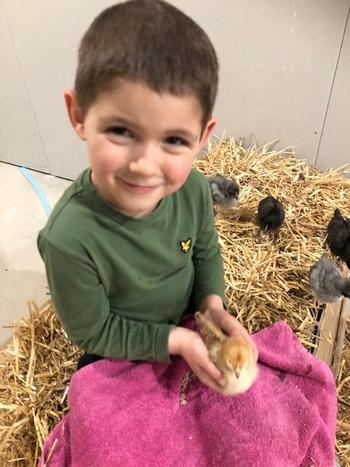 Albie has been busy looking after 12 chicks!