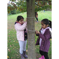 We measured the circumference of tree trunks