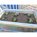 We turned an old water tray into a flower bed!
