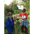 Work experience at Gloucestershire Orchard Trust