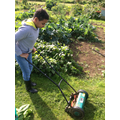 Work experience at Stonehouse Community Allotments