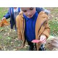 Exploring autumn leaves