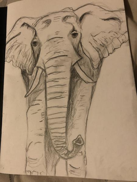 Miss Grassie's 1st elephant sketch