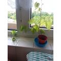 Mutaz's plant