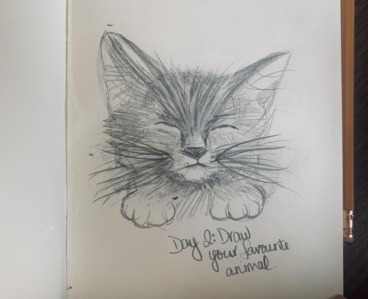 I drew my cat Louie! Miss Harris