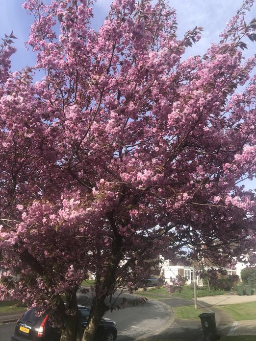 These beautiful blossoms won't last long.