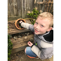 Kingfishers - building new bug hotels