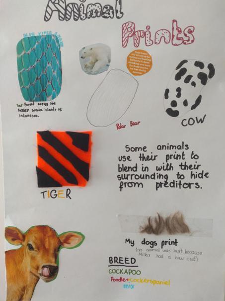 Victoria K Animal Prints