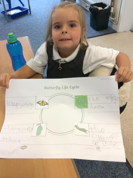 RAN-Evie M - a fantastic life cycle of a butterfly..JPG