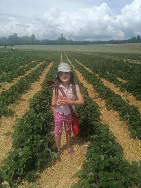 1GC Evie-Mia C has been picking her own strawberries!.jpg