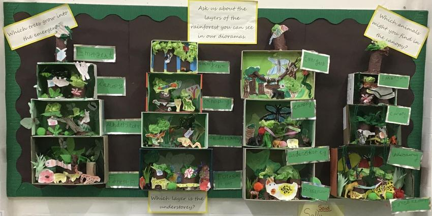 Dioramas showing the rainforest layers