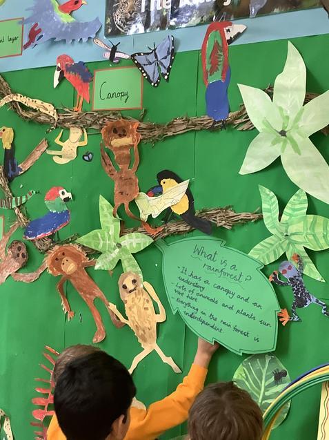 Rainforest display