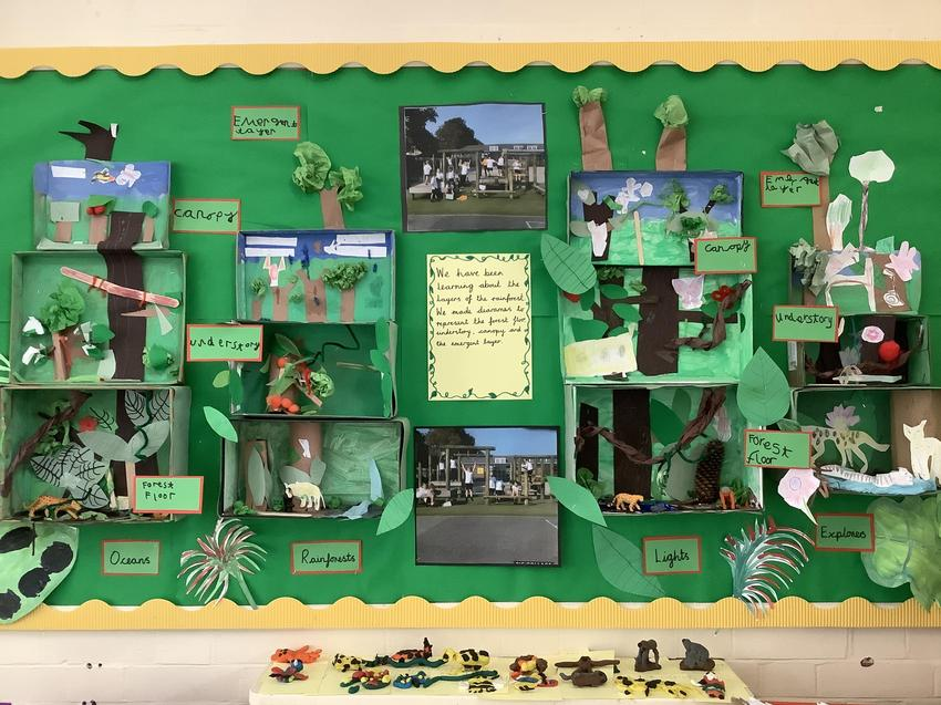Layers of the rainforest dioramas