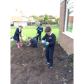 Year 5 Digging for Victory
