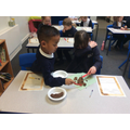 Year 3 Stone Age Stool Samples