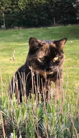 Mrs Barratt's cat Betty