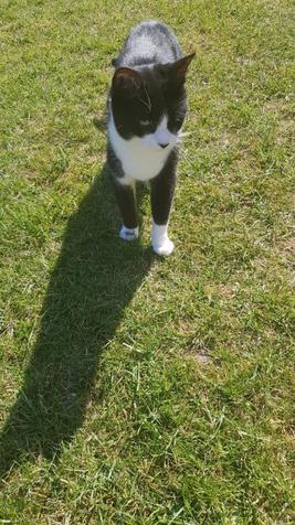 Mrs Oates' cat Missy Pops