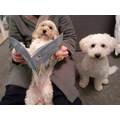 Miss Charles felt very lucky as her dogs read her a bedtime story!