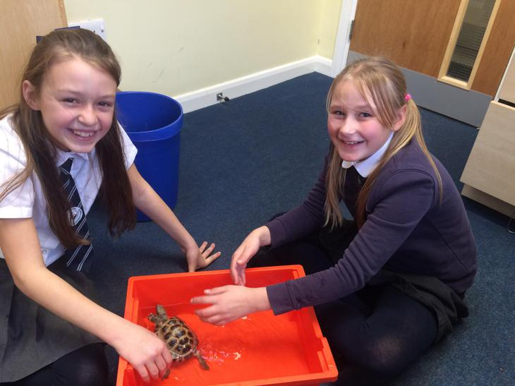 Year 5/6 with Weston the tortoise