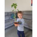 Growing a beanstalk