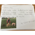 Writing about building houses for pig