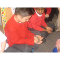 Animal Encounters in Year 1