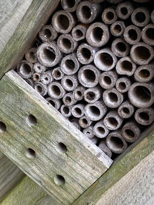 This bee hotel is a great hiding place!
