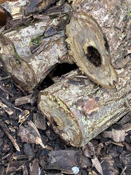Look under logs to find mini-beasts