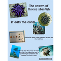 Researching the Crown-of-Thorns Starfish