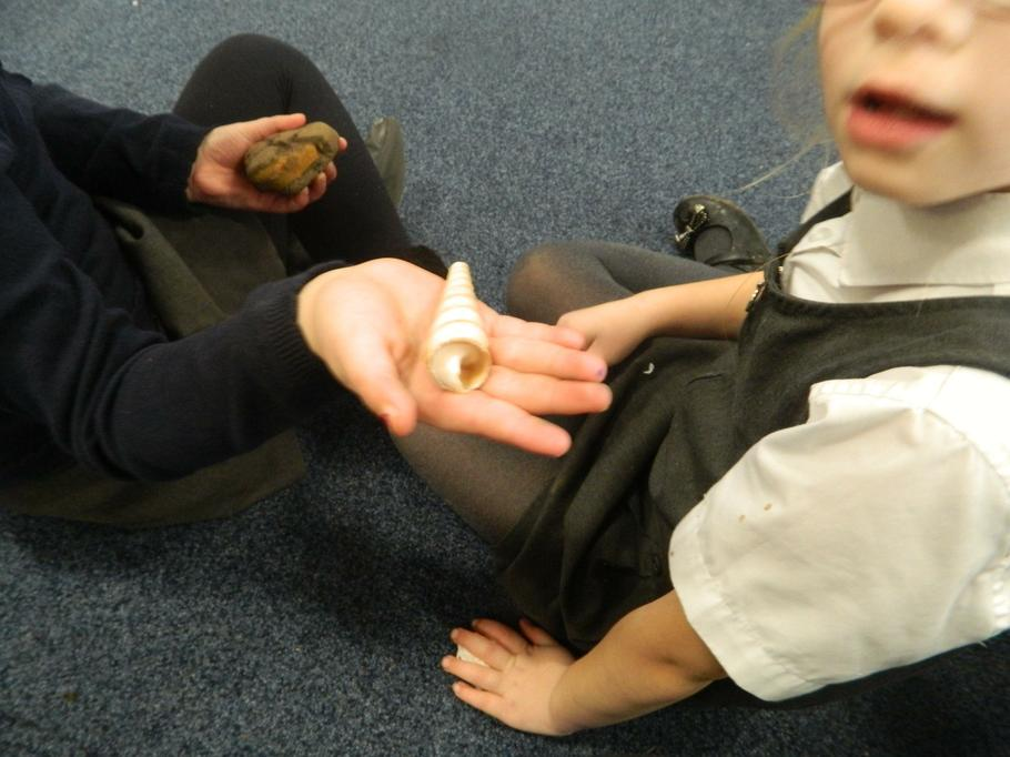 We looked at some of Mary's fossils and shells