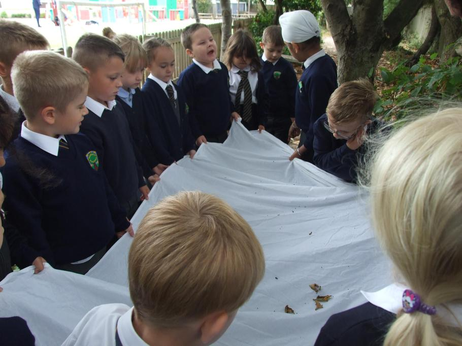 We did a tree shake to see which bugs were hiding