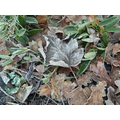 Even the leaves were frozen. They sounded crunchy!