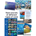The corals are beautiful and all very different