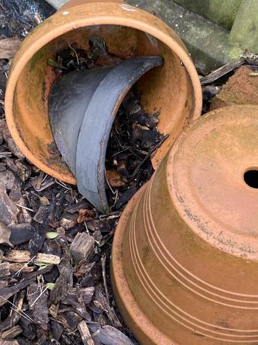 Pots are a great mini-beast habitat